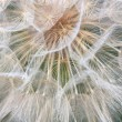 Big dandelion on green background — Stock Photo #1177380