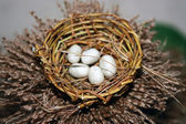 Ptačí hnízdo s vejci — Stock fotografie