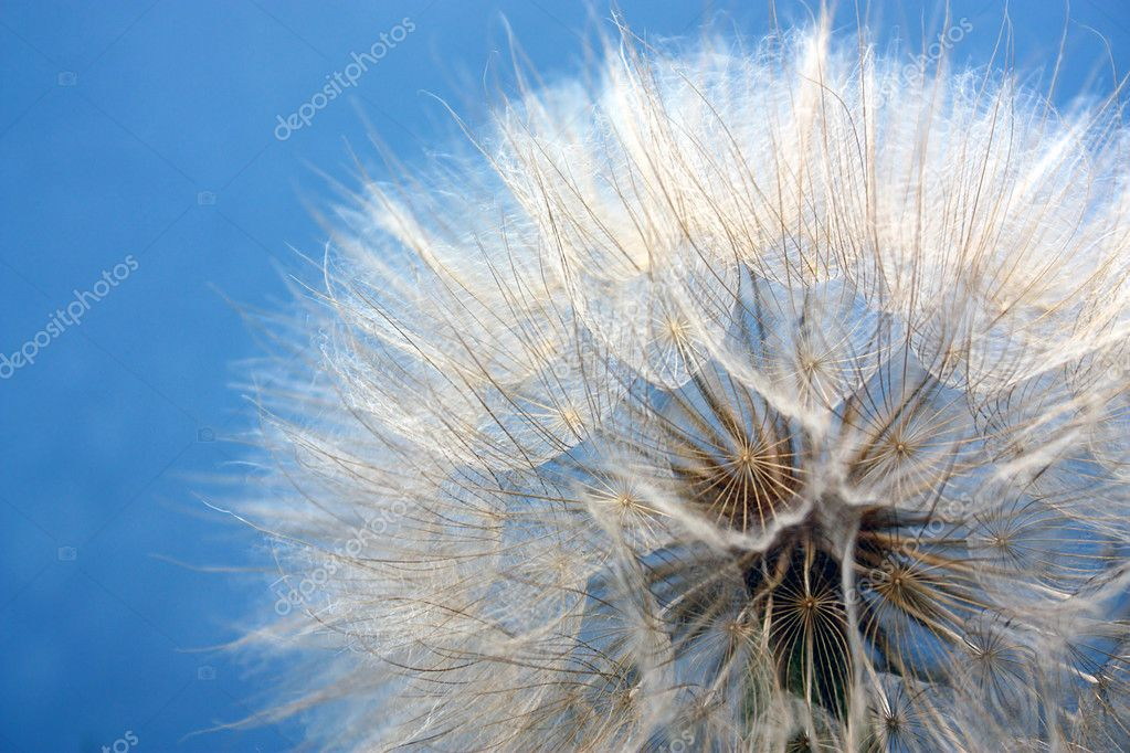 Large dandelion on a background blue sky — Stock Photo #1177454