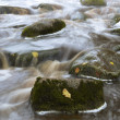 Stock Photo: Leaves in the stream