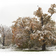 Stock Photo: Autumn snow