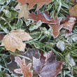 Close-up of dry leaves with rime. — Stock Photo
