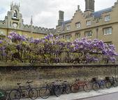 Cambridge bicycles — Stock Photo