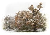 Autumn snow — Stock Photo