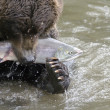 Stock Photo: Bear has seized fish