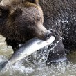 Stock Photo: Brown bear and fish