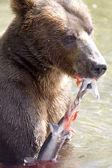 Bear and salmon — Stock Photo