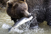 Brown bear and fish — Stock Photo