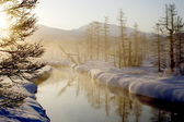 The wood river in the morning — Stock Photo