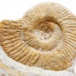 Ancient shell on a  white background - Stock Photo