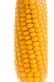 Isolated corn — Stock Photo