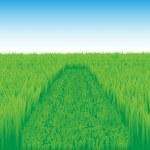 Oblique_grass_field — Stock Vector #1112639