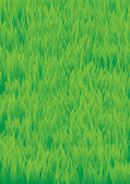 Green_grass — Stock Vector