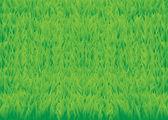 Green_grass_horisontal — Stock Vector