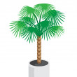 Royalty-Free Stock Vector Image: Palm_tree