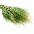 Green wheat ears isolated on white — Stock Photo