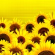 Yellow sunflowers petals background — Stockfoto