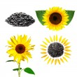 Seeds and sunflower with green leafs — Stock Photo #1357942