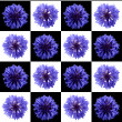 Cornflower — Stock Photo #1357973
