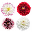 Royalty-Free Stock Photo: Set of colorful dahlia flowers isolated