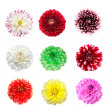 Stock Photo: Colorful dahlia flowers isolated
