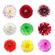 Colorful dahlia flowers isolated - Stock Photo
