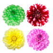 Set of colorful dahlia flowers - Stock Photo