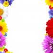 Frame of colorful summer flowers — Stock Photo