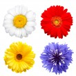 Summer flowers isolated on white — Stock Photo