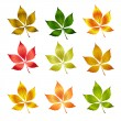 Colorful autumn leafs. — Stock Vector #1357424