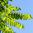 Leaves and sky — Stock Photo