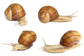 Several snails. Different angle — Stock Photo