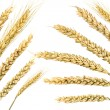 Wheat — Stock Photo #1390781