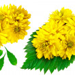 Yellow color flowers with green leafs — Stock Photo