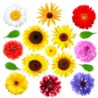 Set of summer flowers isolated - Stok fotoğraf