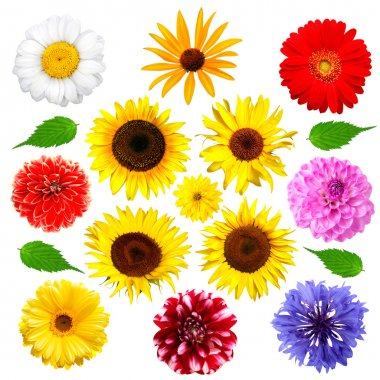 Set of summer flowers isolated