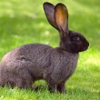Bunny rabbit on a lawn — Foto de Stock