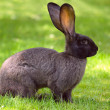 Bunny rabbit on a lawn - Stock Photo