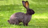 Bunny rabbit on a lawn — Stock Photo
