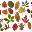 Stock Photo: Set of autumn leaves
