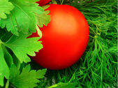 Tomatoes with greens — Stock Photo