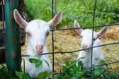 Djur på gården — Stockfoto