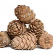 Cedar cones — Stock Photo #1853789