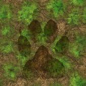 Beast trace — Stock Photo