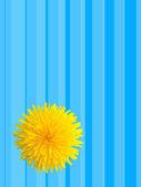 Blühen — Stockfoto