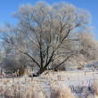 Frozen tree — Stock Photo