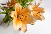 Orange lily on gray — Stock Photo