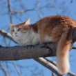 Cat on tree — Stock Photo #2109636