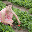 Girl working at strawberry field — Stock Photo