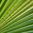 Background of closeup of leaf — Stock Photo